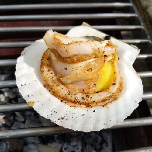 Live Hotate (Scallops with Shell)