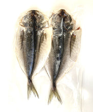 Aji no Himono (horse mackerel, butterfly cut) - Frozen, for BBQ & Grilling アジの干物