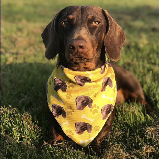 The Dogsy Bandana
