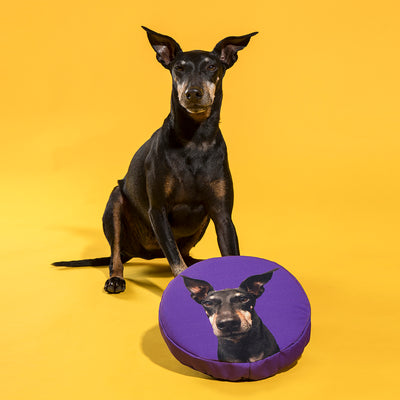 The Dogsy Frisbee