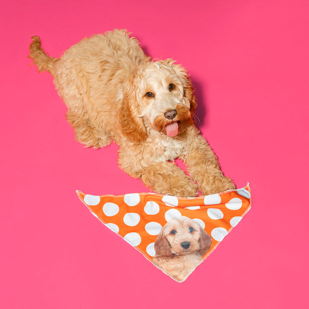 The Dogsy Spotty Bandana