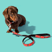 Your Dog Lead