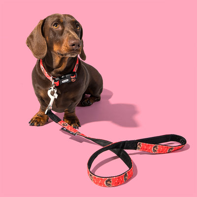 Your Dog Collar and Lead Set