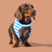 The Dogsy Stripe Bandana
