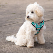 The Dogsy Harness