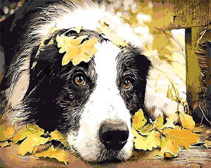 DIY-PAINT BY NUMBERS-AUTUMN DOG