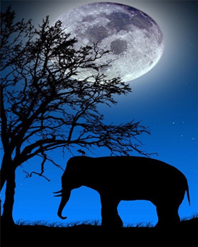 DIY-PAINT WITH DIAMONDS-ELEPHANT UNDER THE MOON