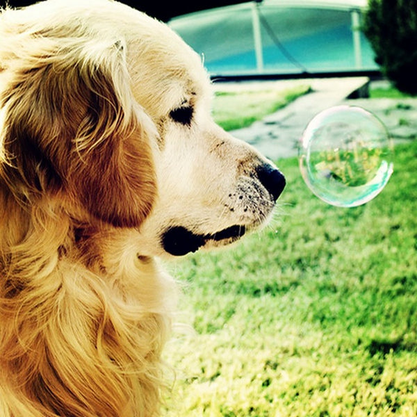 DIY-PAINT WITH DIAMONDS-DOGGY BUBBLES