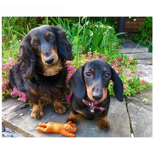 DIY-PAINT WITH DIAMONDS-DACHSHUNDS