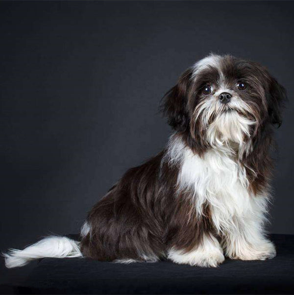 DIY-DIAMOND PAINTING/PAINT WITH DIAMONDS-SHIH TZU