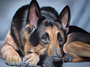 DIY-DIAMOND PAINTING/PAINT WITH DIAMONDS-GERMAN SHEPHERD