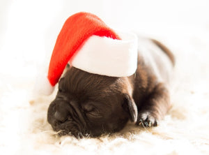DIY-DIAMOND PAINTING/PAINT WITH DIAMONDS-SLEEPING PUPPY SANTA