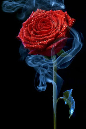 DIY-DIAMOND PAINTING/PAINT WITH DIAMONDS-SMOKING ROSE