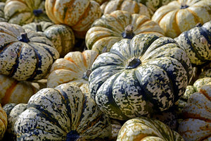 Cool Colored Mini Pumpkins