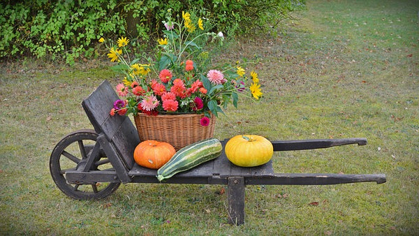 Wheel Barrow and Gourds