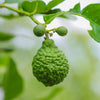 Bergamot Wearable Aromatherapy