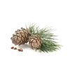 Cedarwood Wearable Aromatherapy