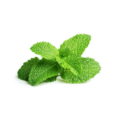 Peppermint - Wearable Aromatherapy