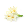 Tuberose - Wearable Aromatherapy