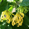 Ylang Ylang Wearable Aromatherapy