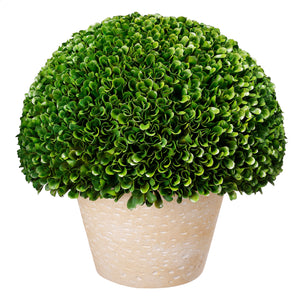 Boxwood Topiary Bush