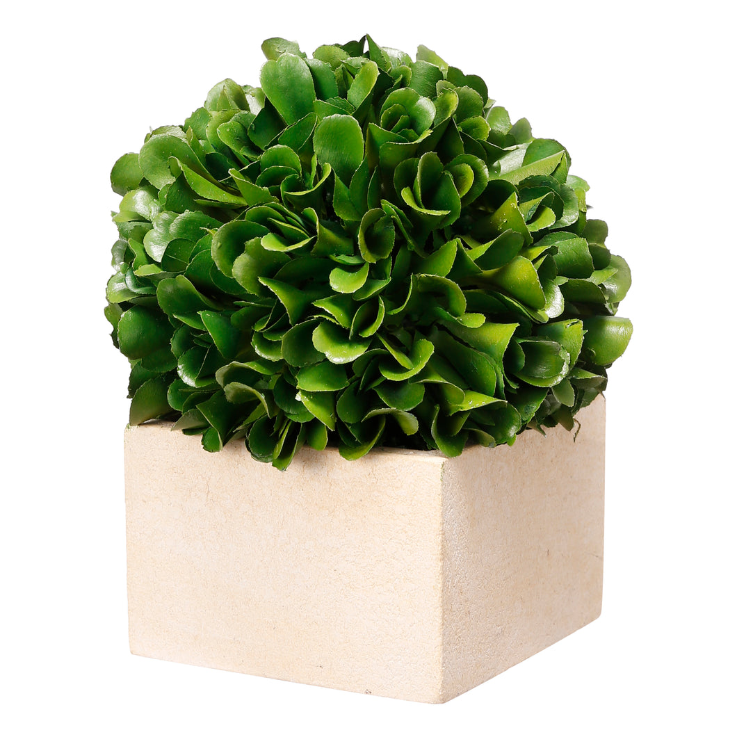 Boxwood Boxed Topiary Petit