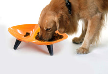 Food and Water Dog Bowl-Melamine Couture Scuplture - Canine Cardio