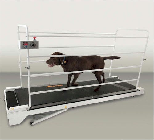Pet Run PR730 Big Dog Treadmill - Canine Cardio