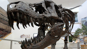 Rich people are buying up dinosaurs because museums are too poor to get them