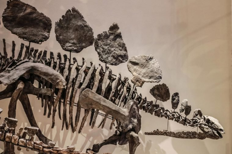"13 Dinosaur ""Facts"" Scientists Wish You'd Stop Believing"