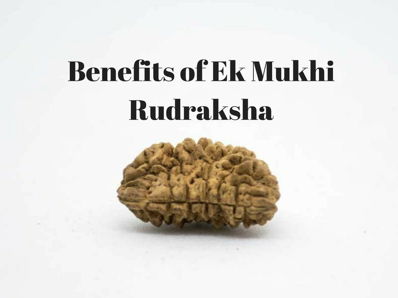 Ek Mukhi (One Face) Rudraksha- Unleash its Power and Benefits!