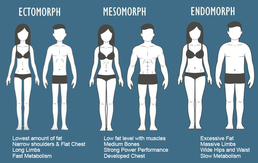 Ectomorph Body Types