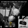 Buy Animal Pak 44, Animal Meal, & Animal Fury - Get Free Animal Gym Bag Sport Performance / Recovery Universal  (4497675780161)