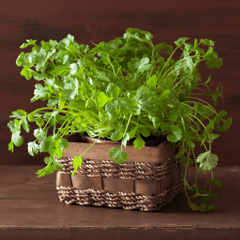 Grocery Cilantro (Dried)