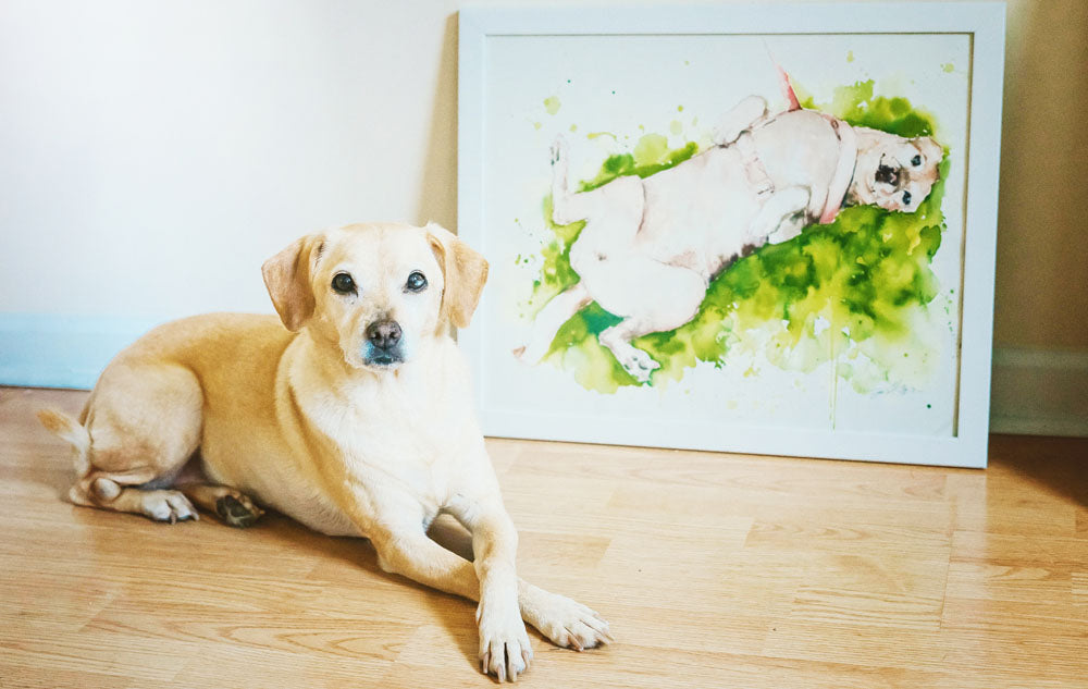 Jamie Hansen pet portraits