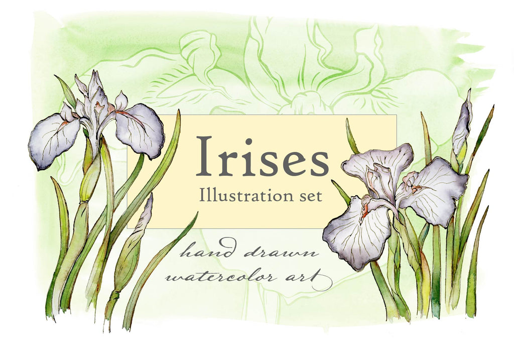 Spring Iris Illustration Set - Hand Drawn Floral Illustrations by Jamie Hansen - Jamie Hansen Art