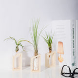 Air Plant Holder Terrarium Planter Bud Vase for Display Home Decoration - BETTIKE.com