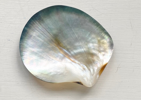 Picture by RAW Copenhagen of a Tahitian pearl shell