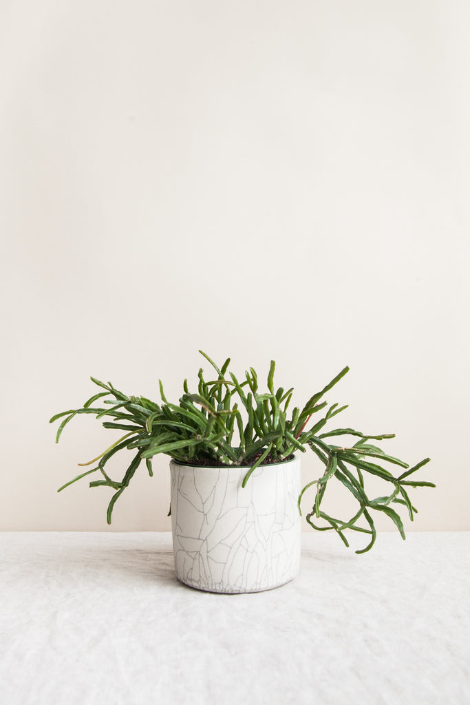 Small Planter / Crackle