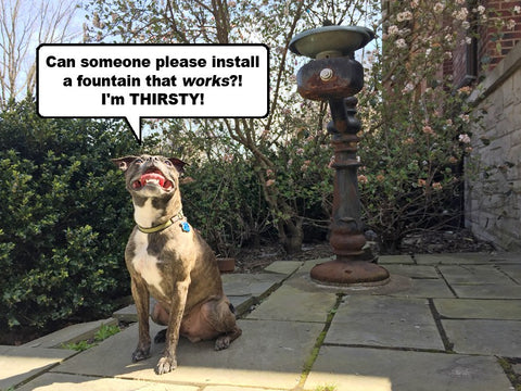 Pet Drinking Fountain in Park