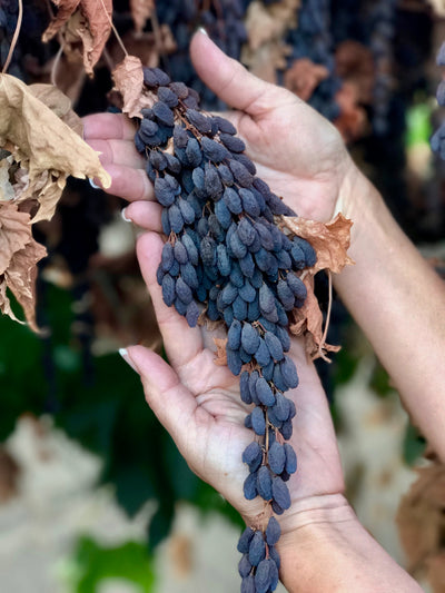 Discover Our Roots: How Life's Grape Got Started