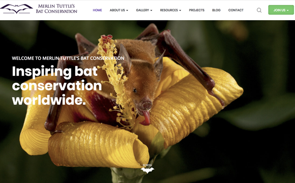 Merlin Tuttle's Bat Conservation landing page image