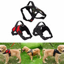 Best No Pull Adjustable Sports Dog Harness All In One Pleasures Of Life
