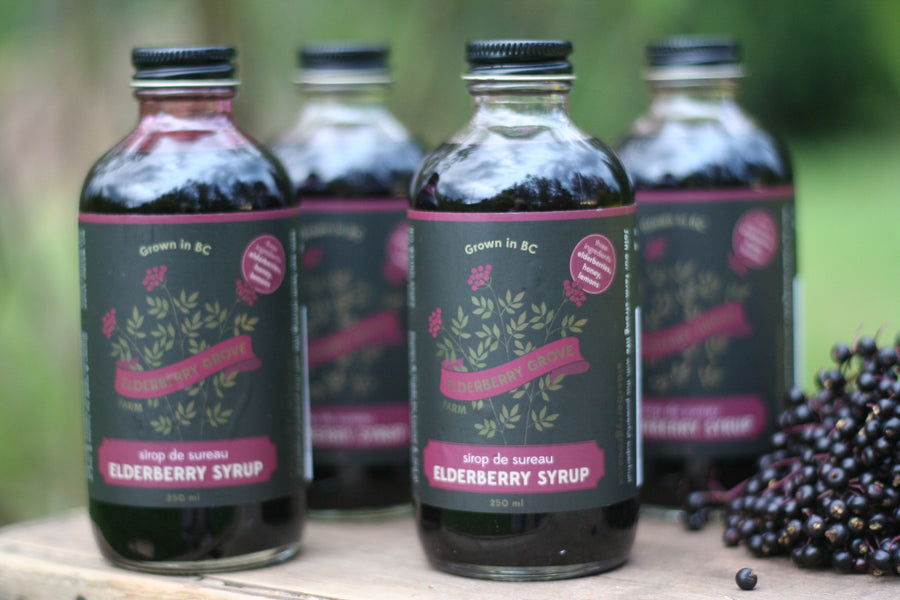 organic elderberry 4-pack