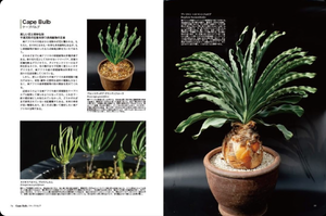 Living with 'Bizarre Plants' Japan Import