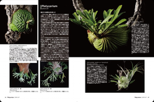 Load image into Gallery viewer, Living with 'Bizarre Plants' Japan Import