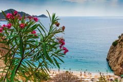 Beach Landscape with Flowers