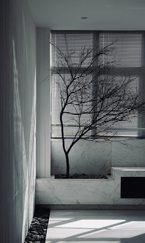 Photo of White Interior with Drapery and Tree