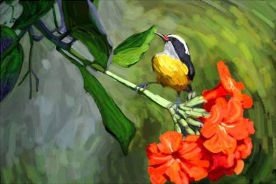 Artwork - Puerto Rico - Bananaquit with Flower