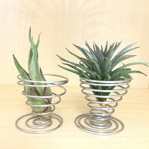 Tillandsia Accessories: Metal Spring Holder Plant Display - AirplantHK
